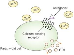 calcium sensing