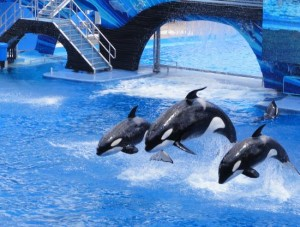 Whales at SeaWorld
