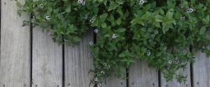 best-edible-plants-grow-indoors-mint
