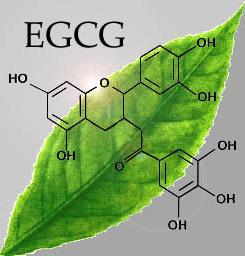 green-tea-antioxidants