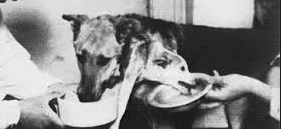 head-transplant-dog