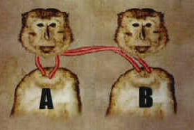 head-transplant-monkey