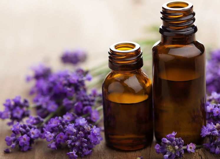 How To Repel Fleas with Natural Essential Oils - Gazette Review