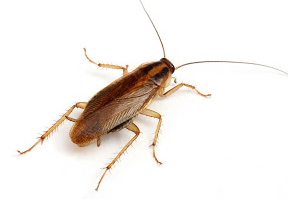 Natural Ways To Keep Roaches Away Gazette Review