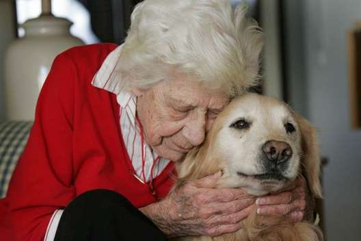 Senior Citizen Service Dog