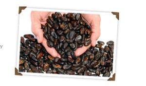 Crio cocoa beans