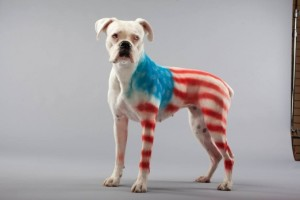 Pet Paint is a great way to dress up any pet - it doesn't have to be a dog, but for maximum surface area, dogs are recommended