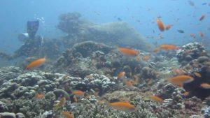 minerva-reefs