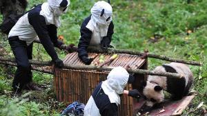 panda-handler