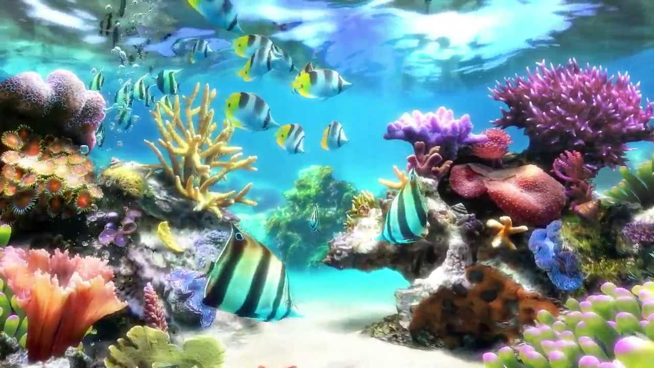 Largest Aquarium In South America Is Opening In November