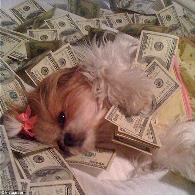 Top 10 Most Expensive Dog Breeds - 2018 List - The Gazette ...