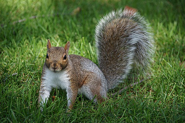 squirrels can be found in many areas across the us and most usually run when they see humans but in lake vista a neighborhood in new orleans - Pictures Of Squirrels