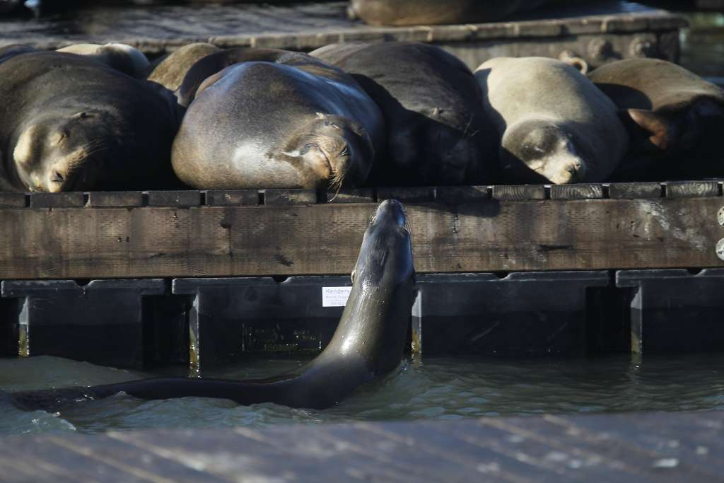 Sea Lion Leaves Swimmer With Serious Arm Injury