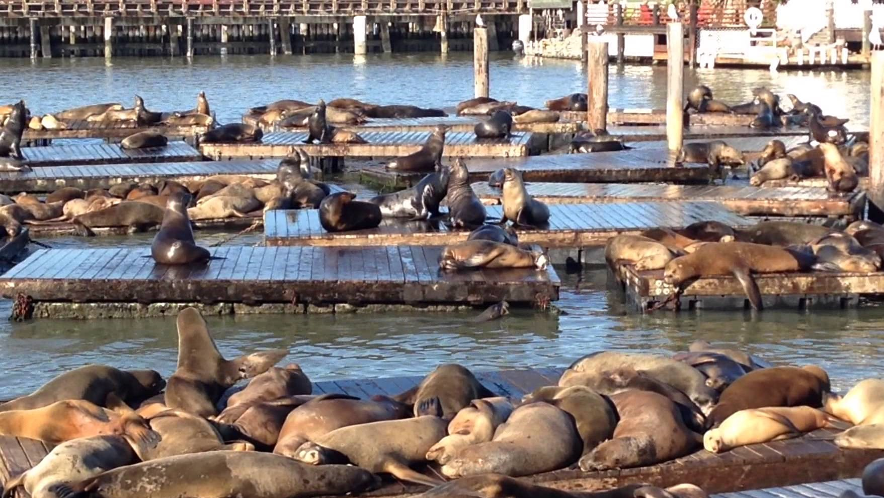 San Francisco Aquatic Park shut over 'aggressive' sea lions