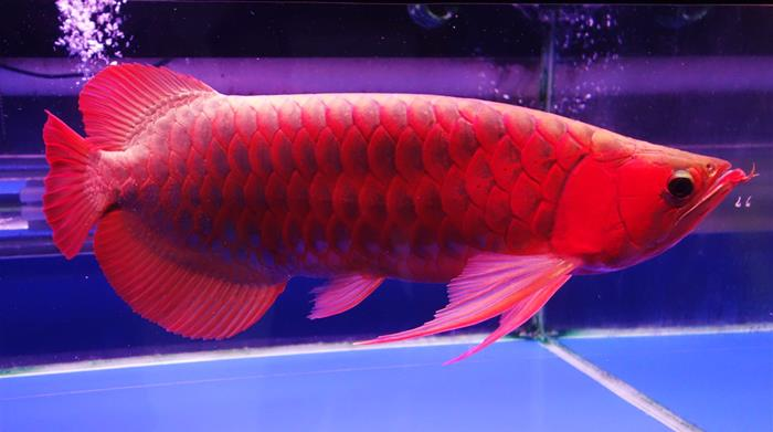 Top 10 Most Expensive Fish Gazette Review